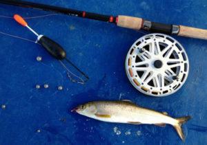 Летняя рыбалка на хариуса на поплавочную удочку
