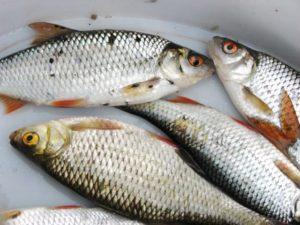 Черные точки на рыбе можно ли есть