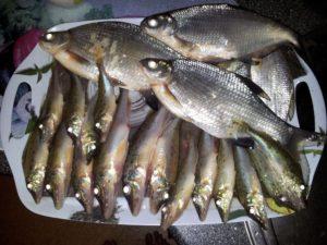 Какая рыба ловится в воронеж реке