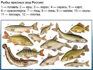 Рыбы которые живут в пресной воде