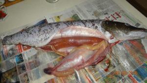Переваривается ли кость от рыбы в желудке