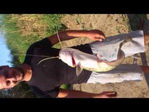Ловля рыбы в эгейском море