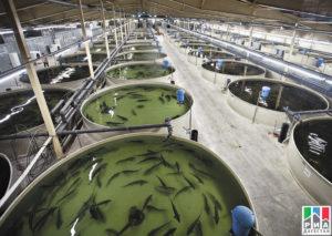 Разведение рыбы в московской области