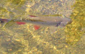 Рыба в реке устье