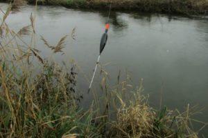 Ловим рыбу на поплавок видео