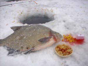 Ловля леща на вымя зимой