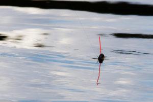 Ловля леща в проводку
