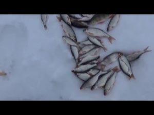 Ловля рыбы на козу видео