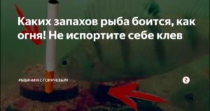 Каких запахов боится рыба