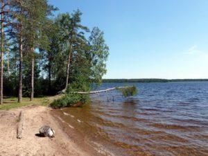 Озеро глубокое выборгский район какая рыба