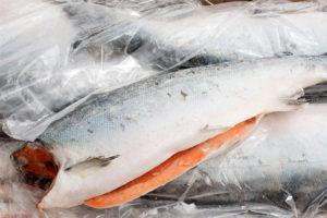 Какая рыба жирнее кета или семга