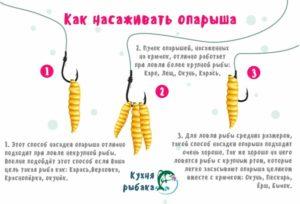 Как насадить опарыша на крючок на карася
