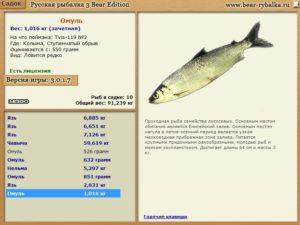 Омуль семейство каких рыб