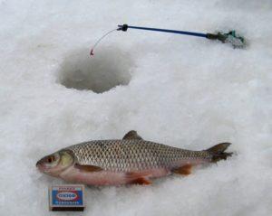 Зимняя ловля сороги на мормышку