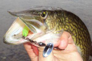 Что нужно для рыбалки на щуку летом