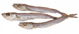 Рыба путассу что это за рыба