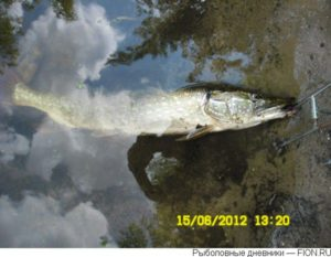 Река пехорка рыбалка красково