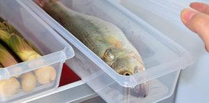 Хранение свежей рыбы в холодильнике