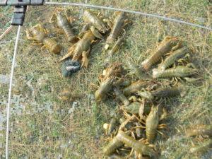 Ловля раков в тульской области