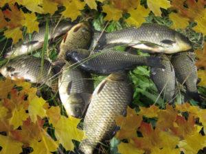 На что ловится рыба в октябре
