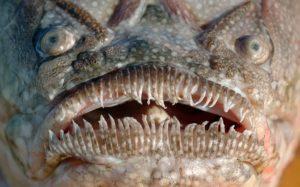 Уродливые рыбы мира