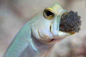 Как называется рот рыбы