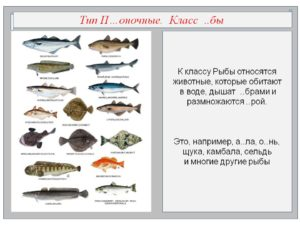 К какому классу относятся рыбы
