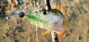 Мормоджиг на белую рыбу