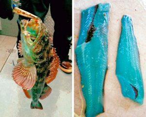 Рыба с голубым мясом