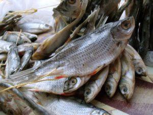 Как довезти вяленую рыбу