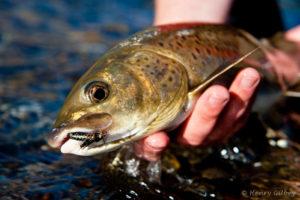 Рыбалка на ленка в сибири