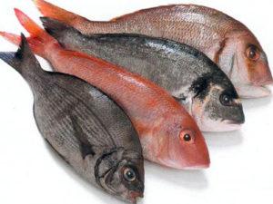 Рыба морская курица как по другому называется
