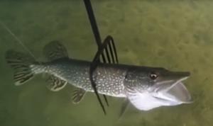 Острожение рыбы осенью видео