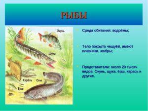 Приспособление к водной среде обитания окуня