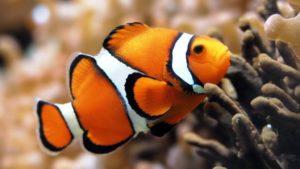 Экзотические виды рыб