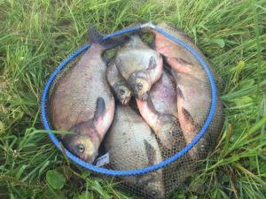 Рыбалка на фидер на волге видео на леща