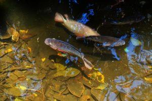 Рыбы живущие в озере