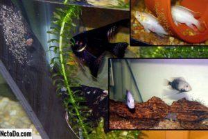 Разведение щуки в аквариуме