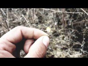 Как поймать фазана на рыболовный крючок