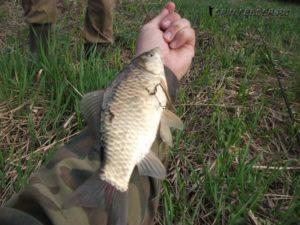 Ловля карася в апреле на пруду видео