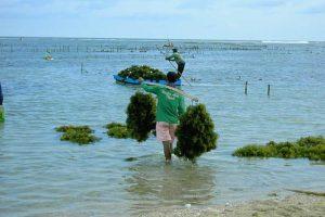 Прилив отлив рыбалка