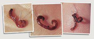 Как правильно насаживать червя на мормышку