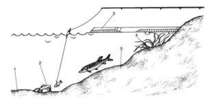 Как ловить щуку на закидушку осенью