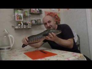 Рыба змееголов что можно приготовить