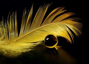 Что означает рыба золотые перья