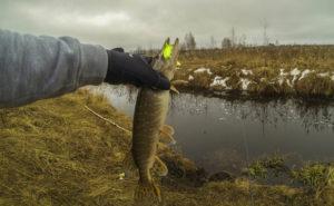 Ловля щуки на плавающую резину