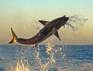 Прыгающие рыбы над водой