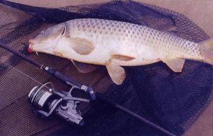Как ловить сазана в сентябре на реке