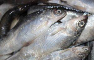 Сколько времени жарить рыбу сырок