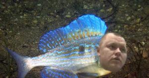 Рыба окунь синий